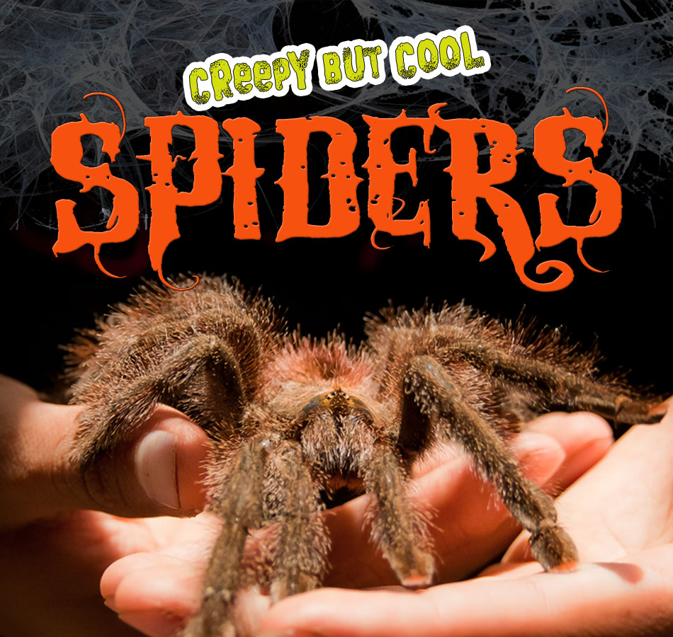 Creepy But Cool Spiders