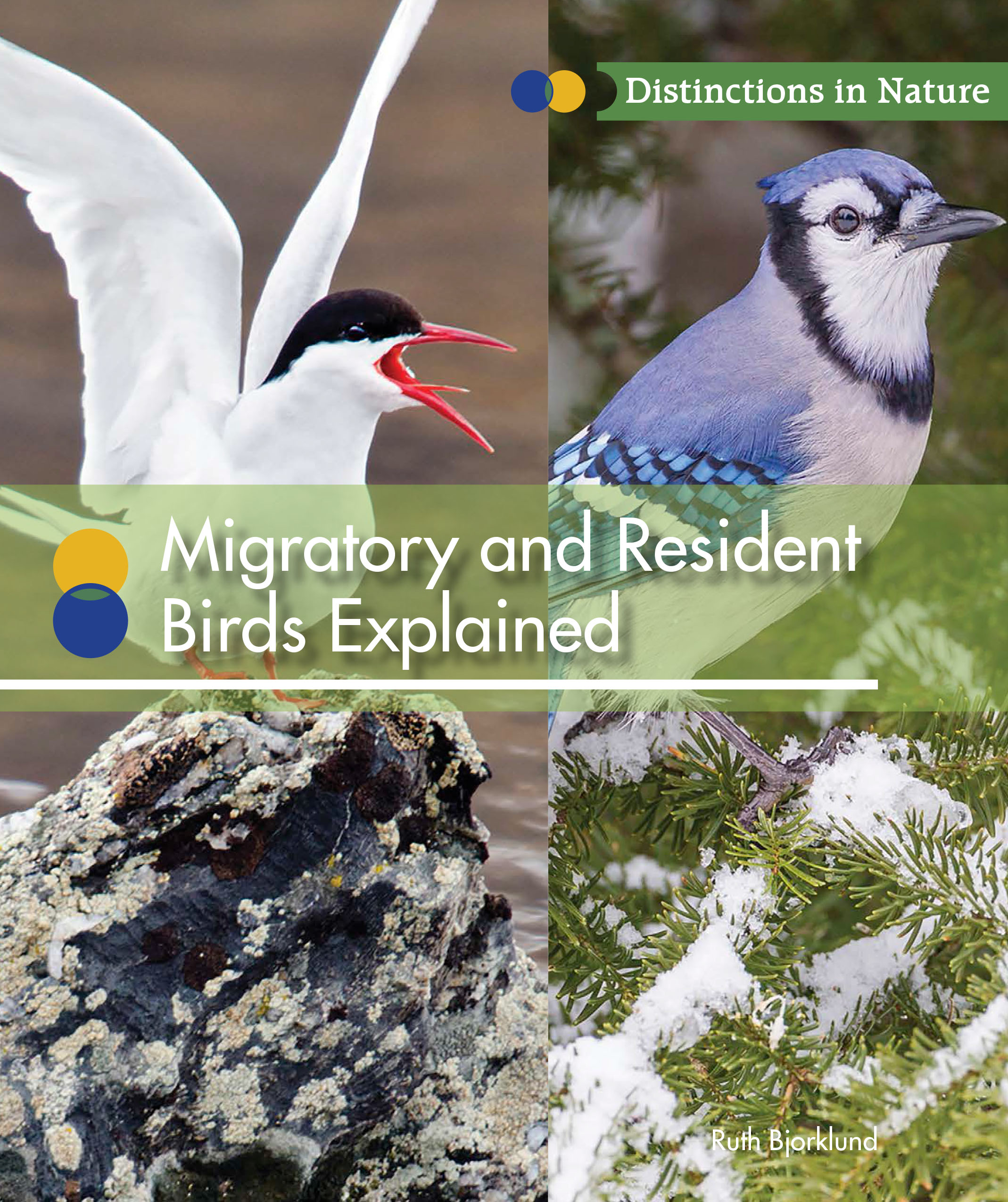 Migratory and Resident Birds Explained